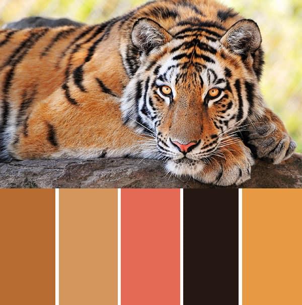 Tiger Colour Scheme2