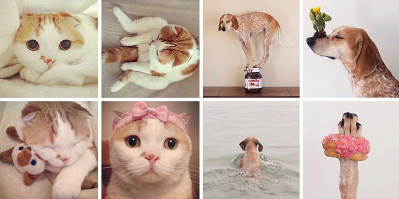 Must Follow Animals on Instagram