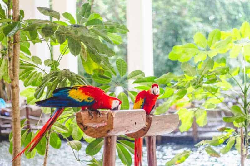 Mexico Honeymoon Travel Guide Playa Del Carmen 2015 (128)
