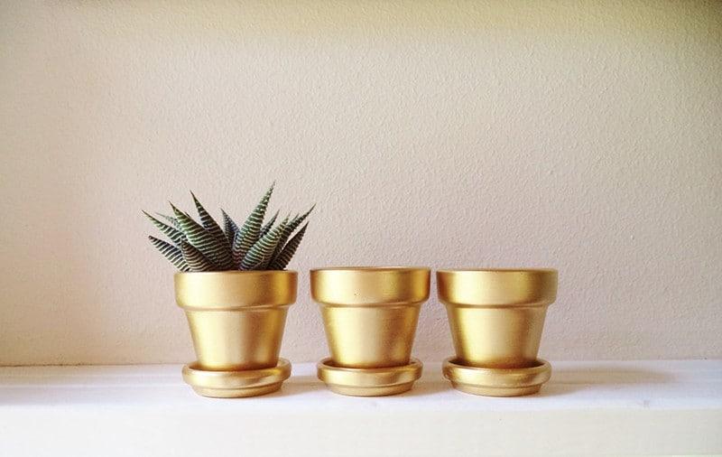 Cactus Mini Planters