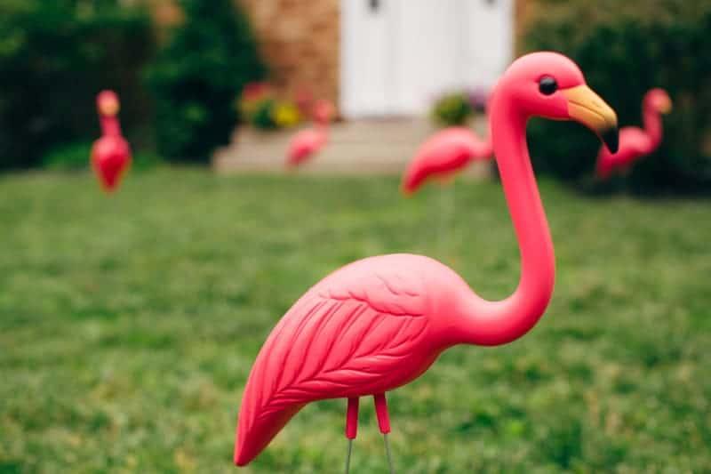 Backyard Flamino themed DIY Wedding in South Hampton USA  (1)