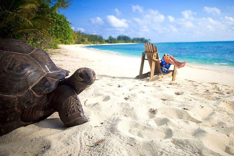 10 Unique honeymoon activities - Seychelles baby turtles