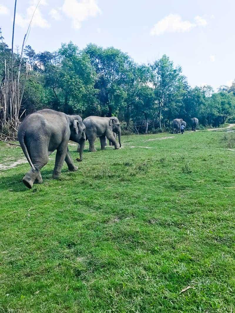 Elephant Jungle Santuary Chang Mai Thailand Ethical Sustainable Eco-Tourism Welfare-40