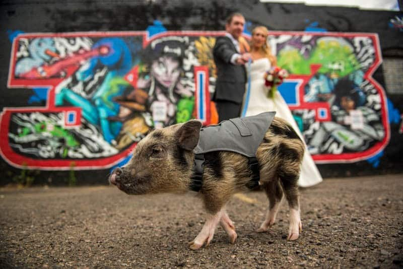 FUNKY COLORADO THEMED WEDDING WITH A PET PIG (4)