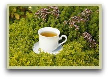 picture of oregano tea, oregano picture