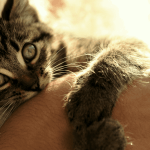 Why Do Cats Cuddle and Then Bite?