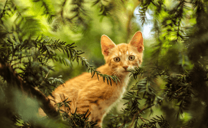 How to Keep a Cat From Climbing a Tree