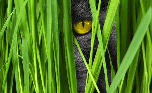 What Color Do Cats See Best?