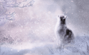 Where Do Feral Cats Go In the Winter?