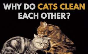Why Do Cats Clean Each Other?