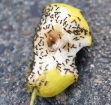 hormigas 3
