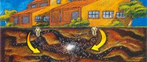 termitas subterráneas, plaga, riesgo