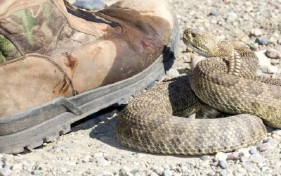 Best Snake Boots for Hot Weather