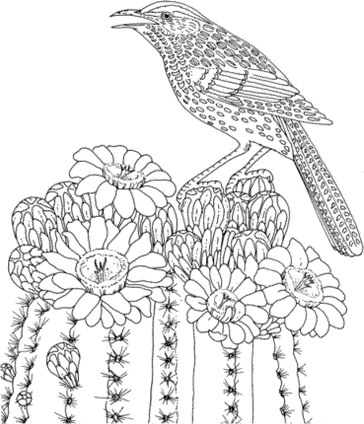 arizona-bird-coloring-pages-for-adults