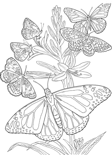 butterfly-coloring-pages-for-adults-free-printable