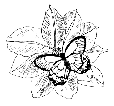 flower-coloring-pages-for-adults