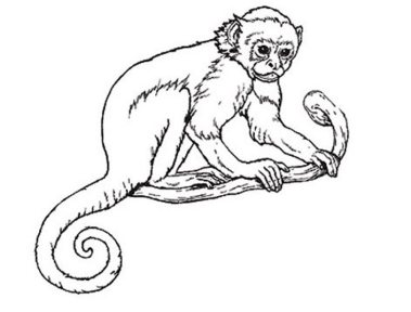 coloring-pages-of-monkeys