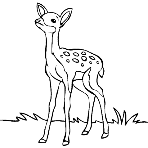 deer-in-forest-coloring-pages