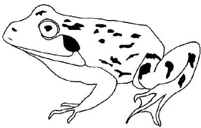 frog-and-toad-are-friends-coloring-pages