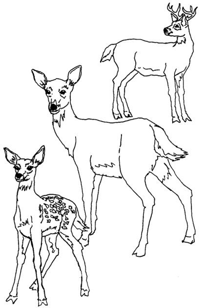 mother-and-baby-deer-coloring-pages