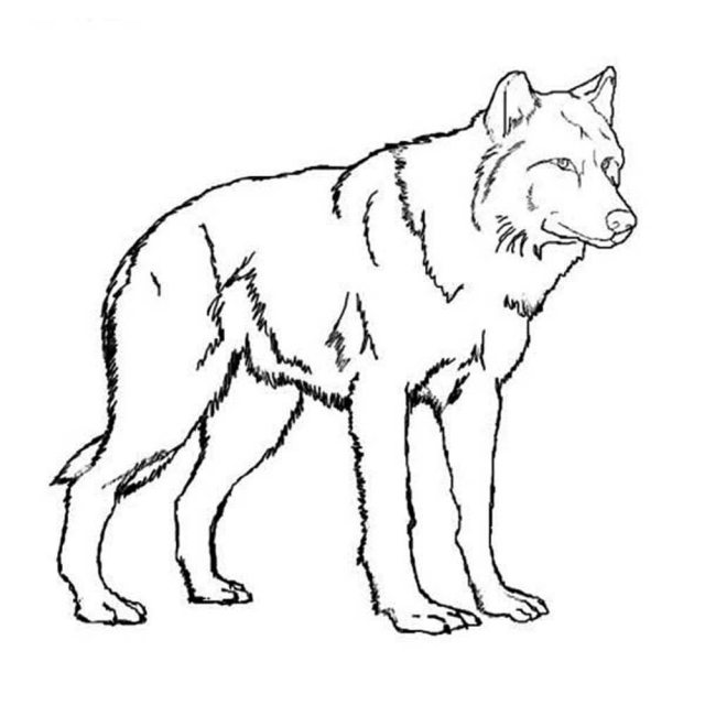 realistic-wolf-coloring-pages   BestAppsForKids.com