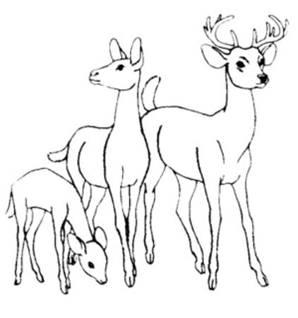 whitetail-deer-coloring-pages
