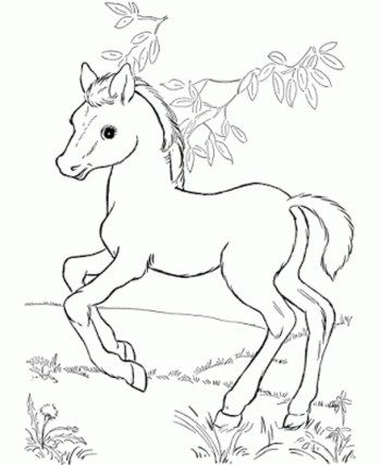baby-horse-coloring-pages