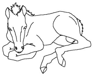 coloring-pages-of-a-horse