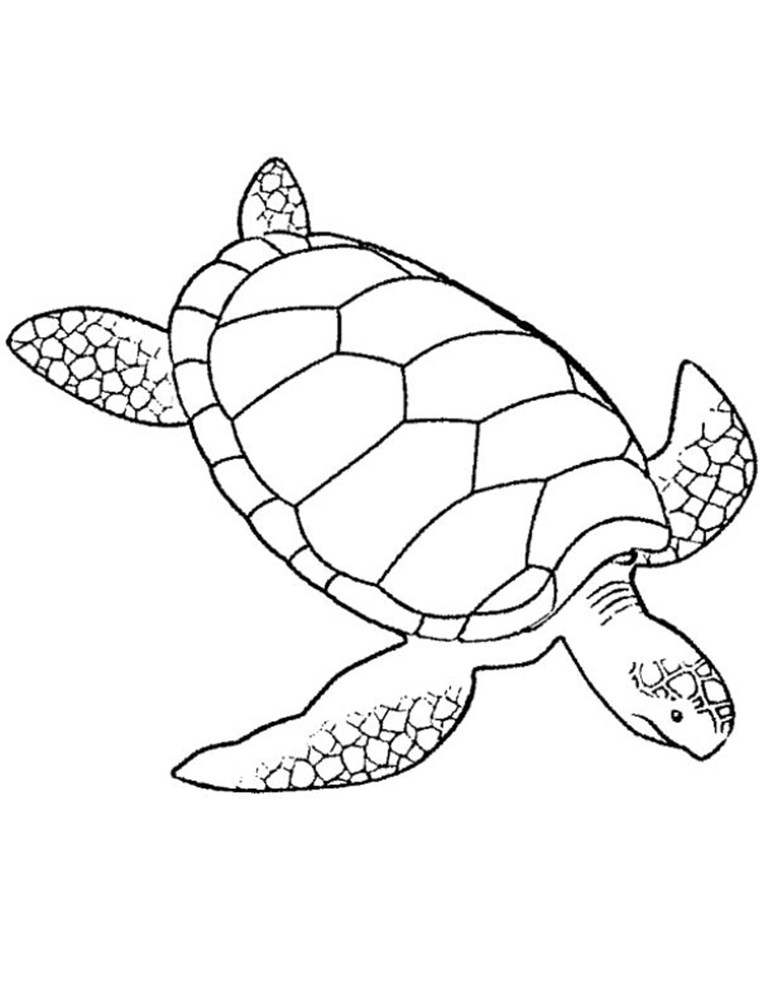 free coloring pages of a turtle | Print & Download - Turtle Coloring Pages as the ...