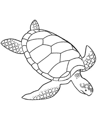 easy-printable-turtle-coloring-pages