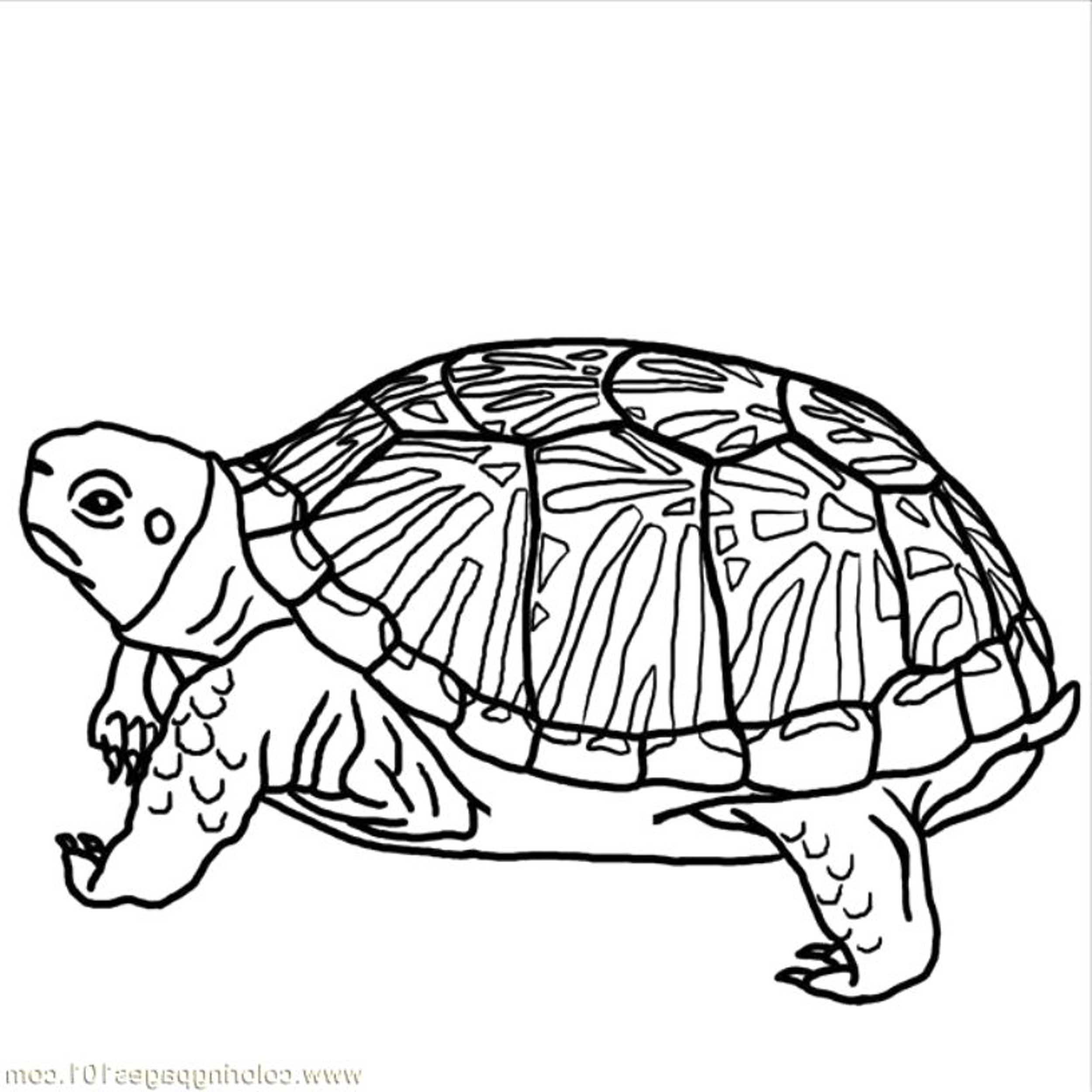 Print & Download - Turtle Coloring Pages as the Educational Tool