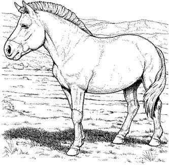 horse-color-pages