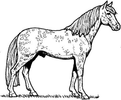 horse-coloring-pages-free