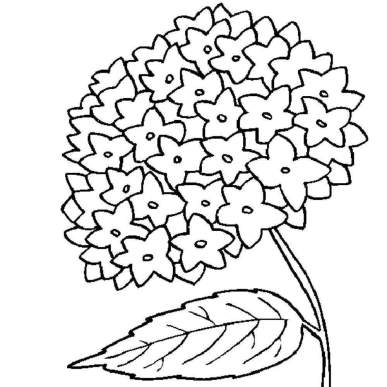 printable-coloring-pages-of-flowers