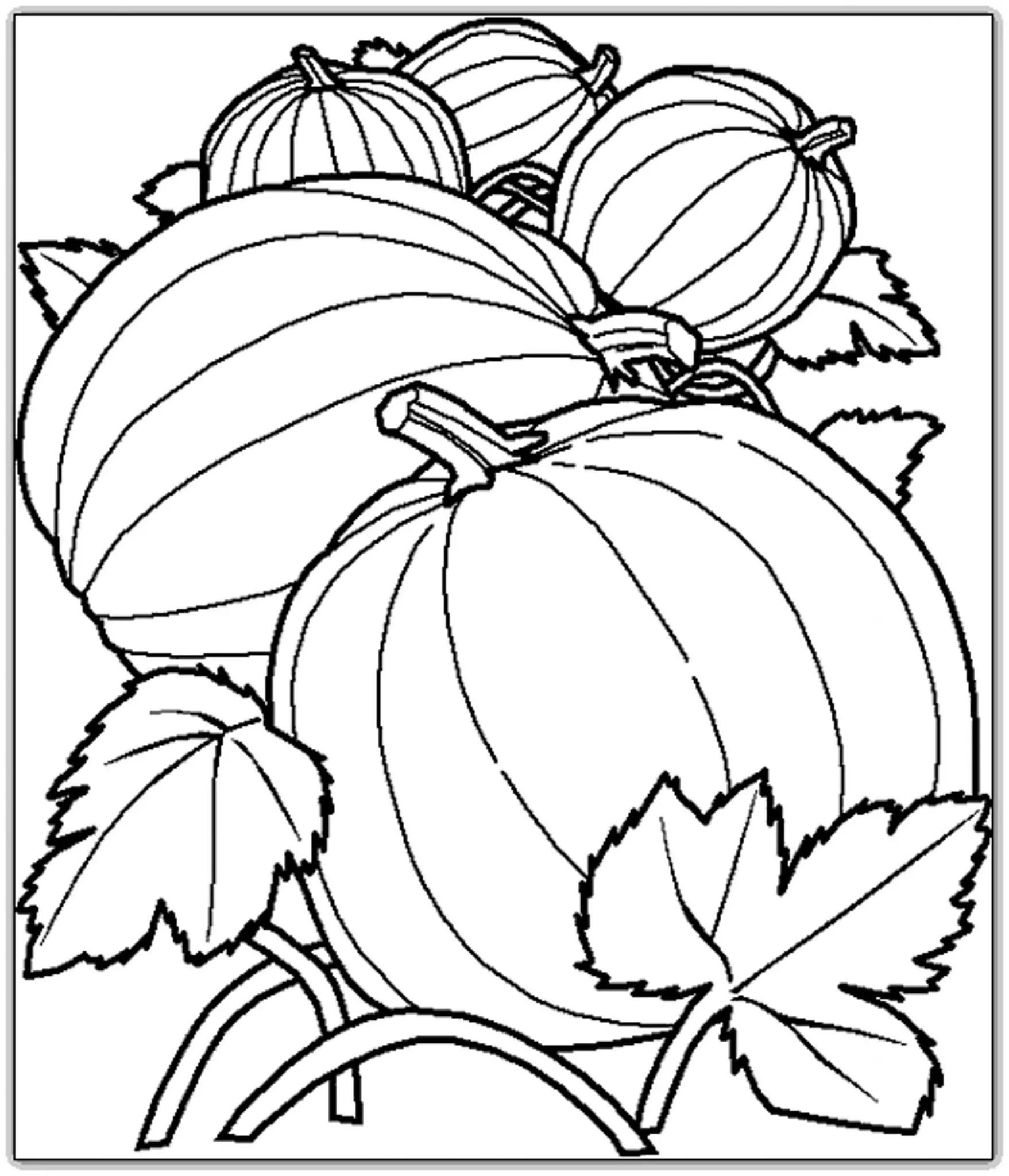 Printable Pumpkin Coloring Pages Harvest