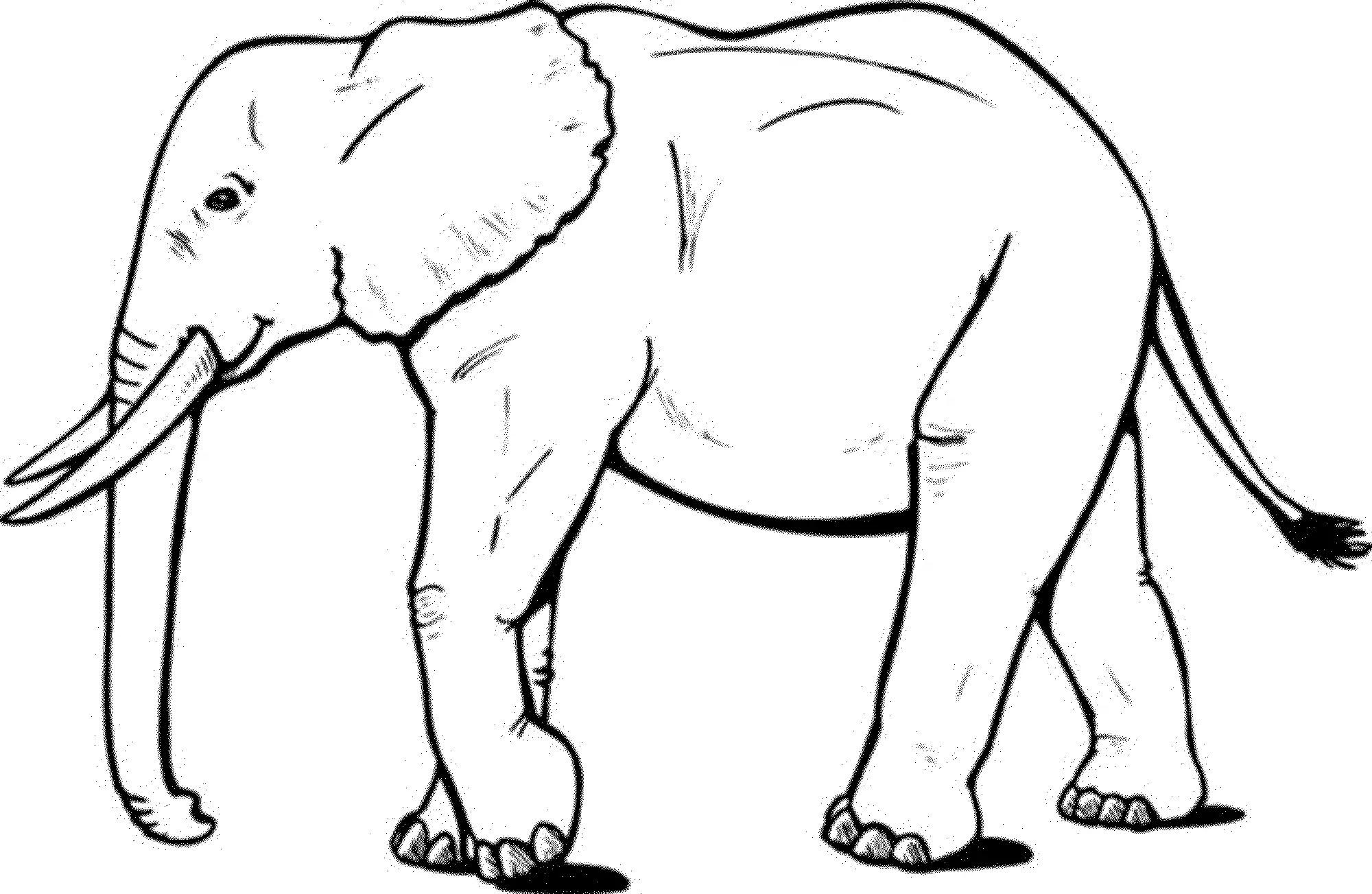 Print & Download - Teaching Kids through Elephant Coloring ...