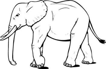realistic-elephant-coloring-pages