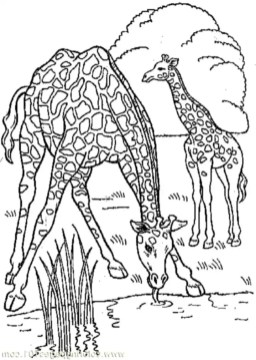 wild-giraffe-coloring-pages