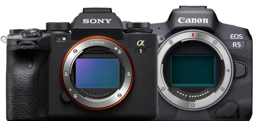 Recensione Sony a1 vs Canon EOS R5 su ritratti, sport e fauna selvatica