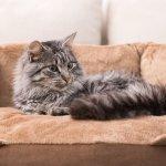 Best Cat Beds Uk 2020 Reviews Washable Igloo Basket Beds