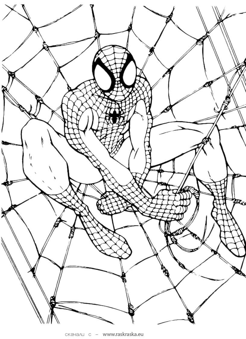the amazing spiderman to color online coloring page super heroes