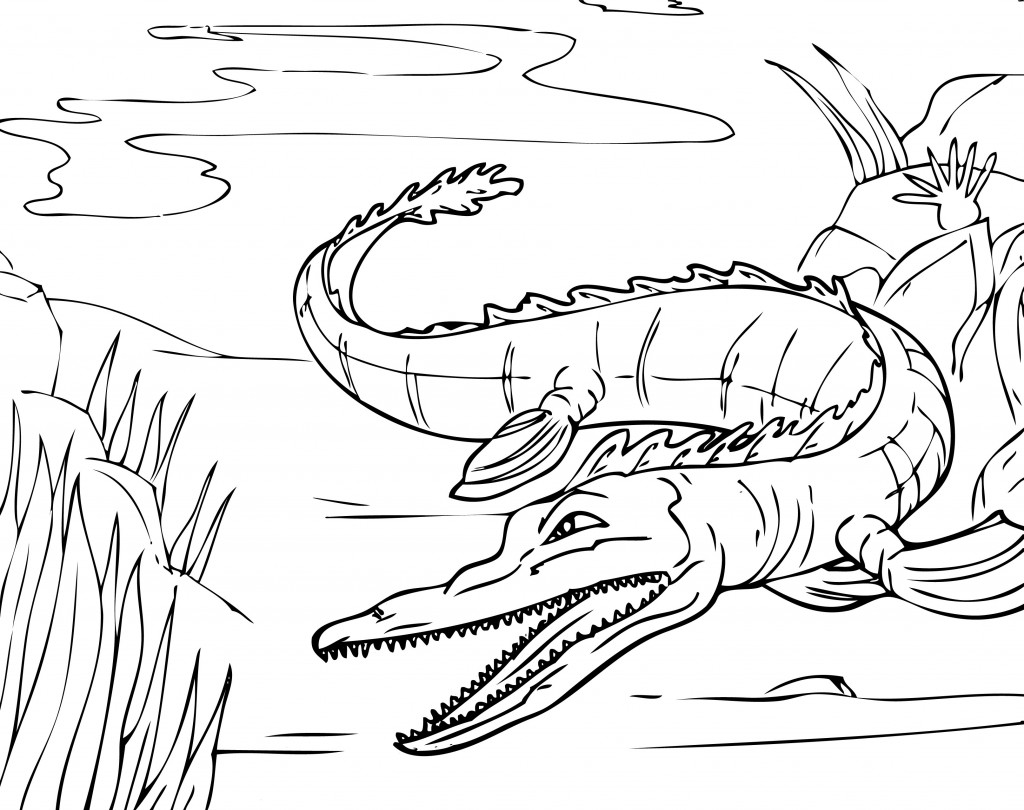 Worksheet Alligator Drawing