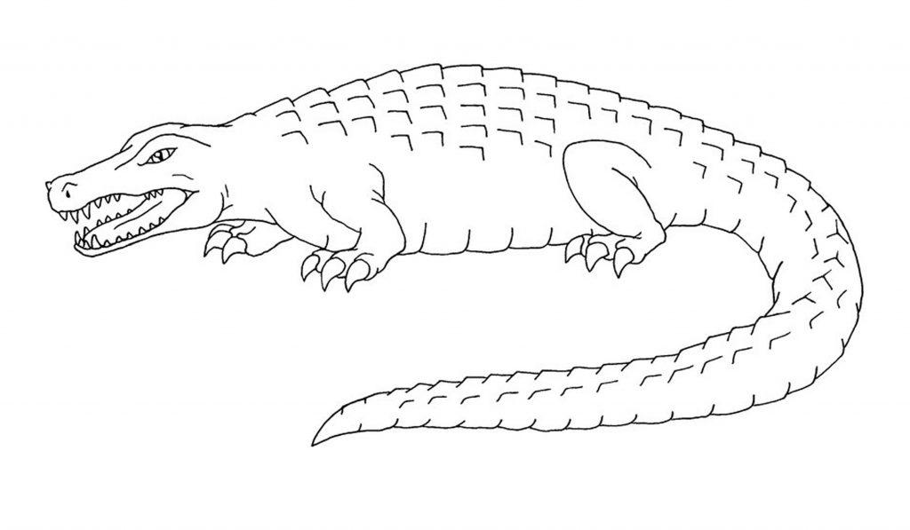 crocodile aligator animal coloring sheet for kids lzk gallery