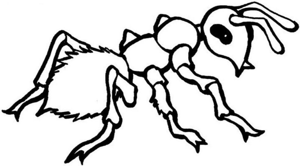 ant coloring pages printable on snowman coloring page clip art
