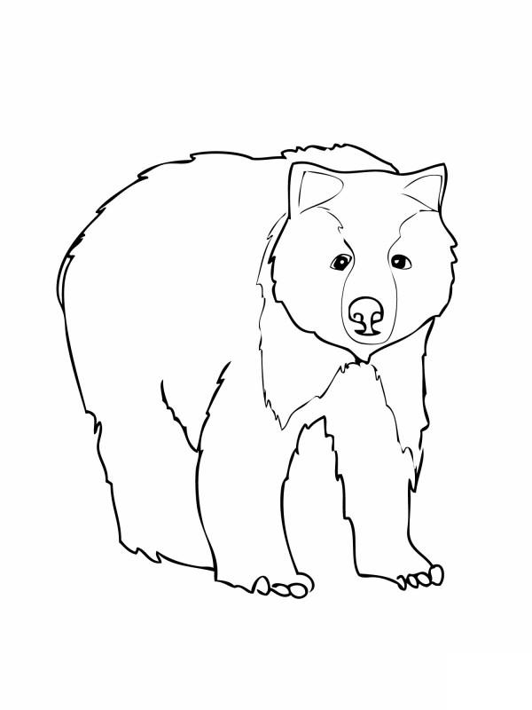 black bear coloring page # 1
