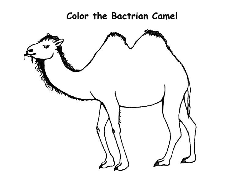 camel head coloring page hand shadow free printable coloring
