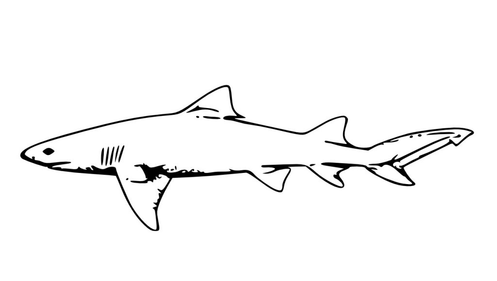 Shark | Free Printable Templates & Coloring Pages | FirstPalette.com | 580x1024