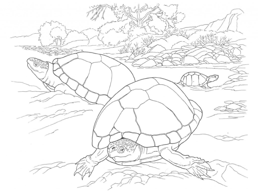 turtle coloring page free printable turtle coloring pages sea turtle