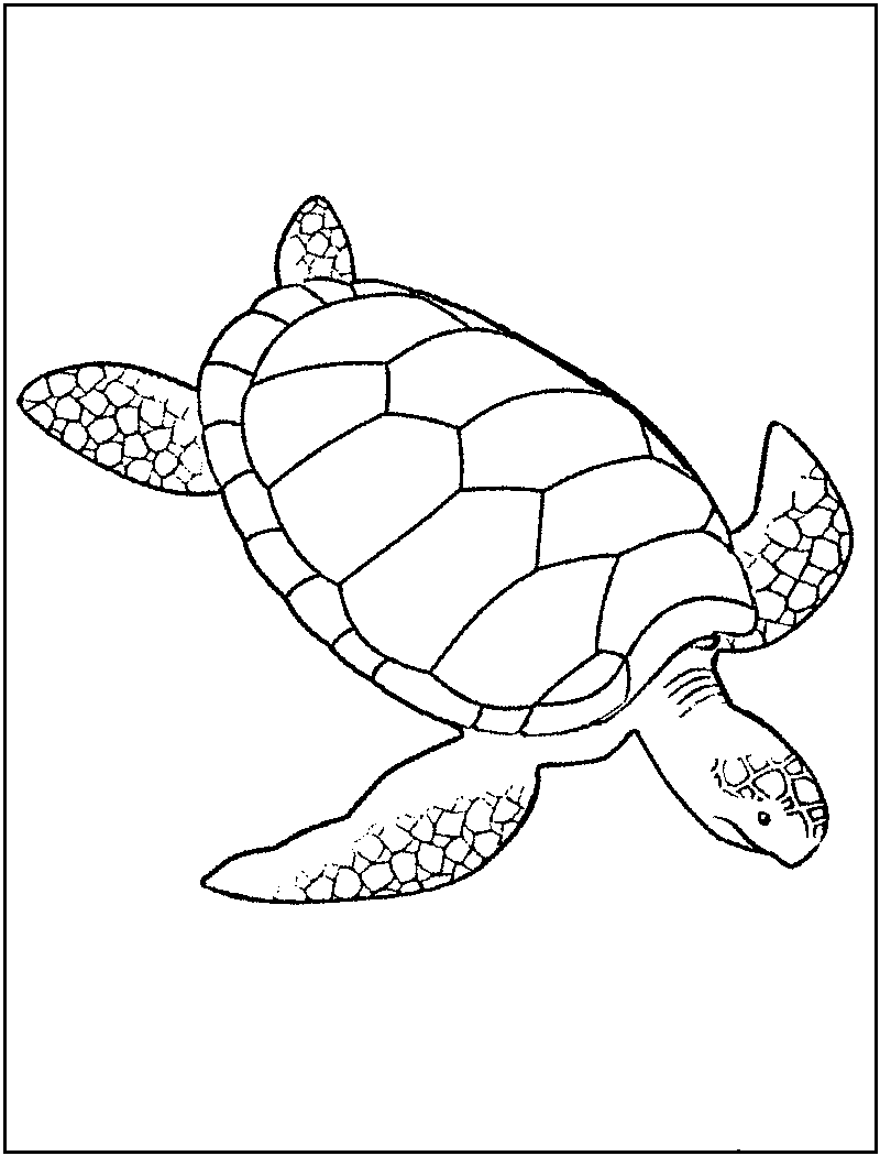 lives of a turtle colouring pages