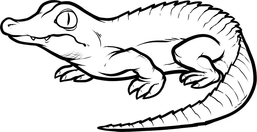 alligator coloring pages free coloring pages printable